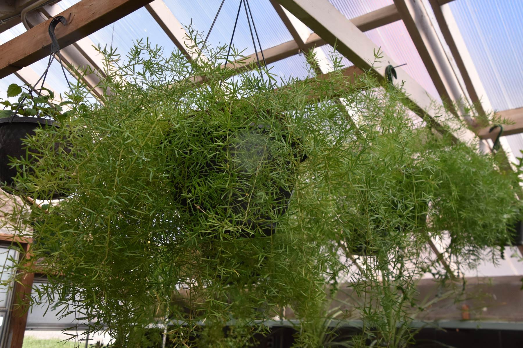 webplantsale11