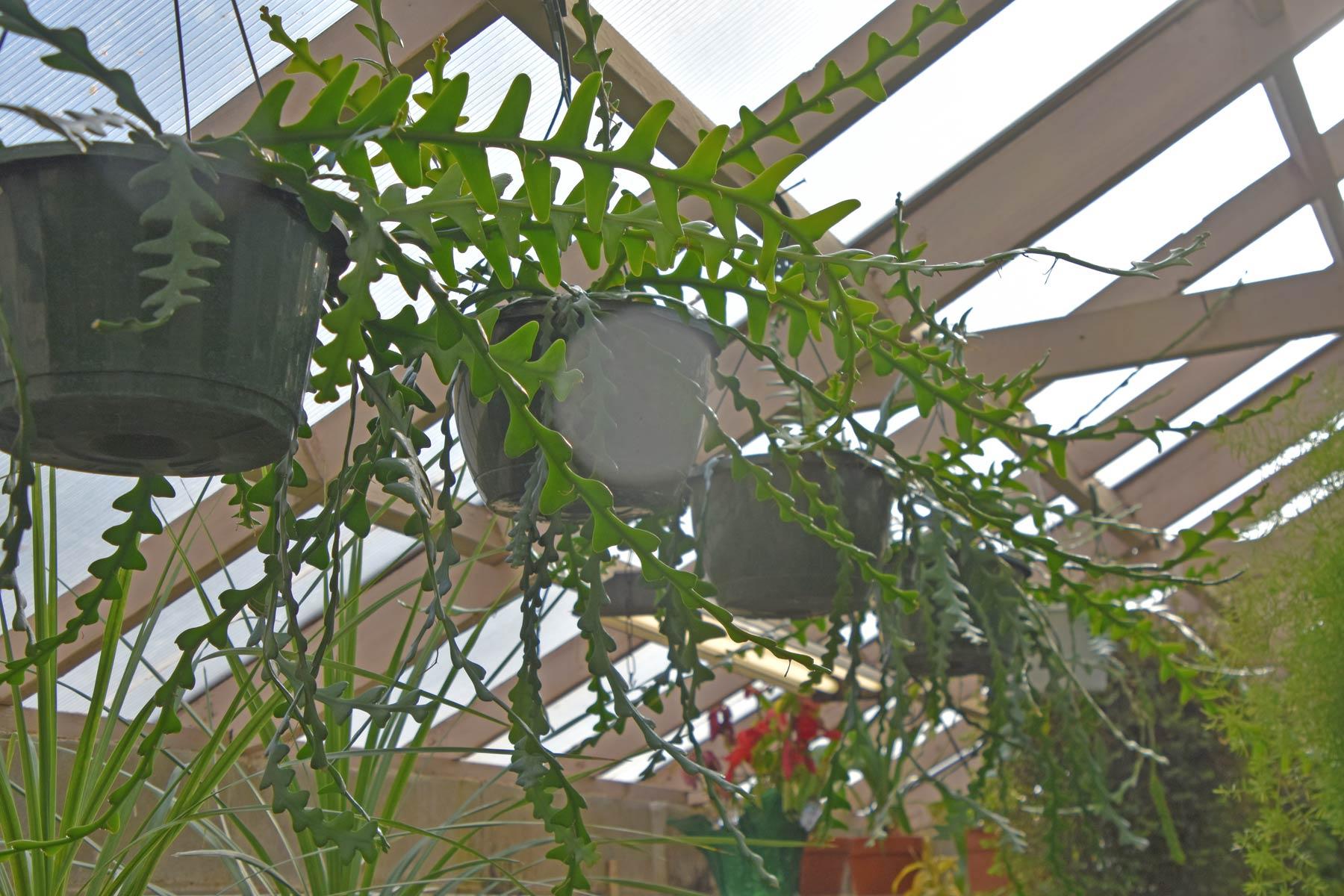 webplantsale2
