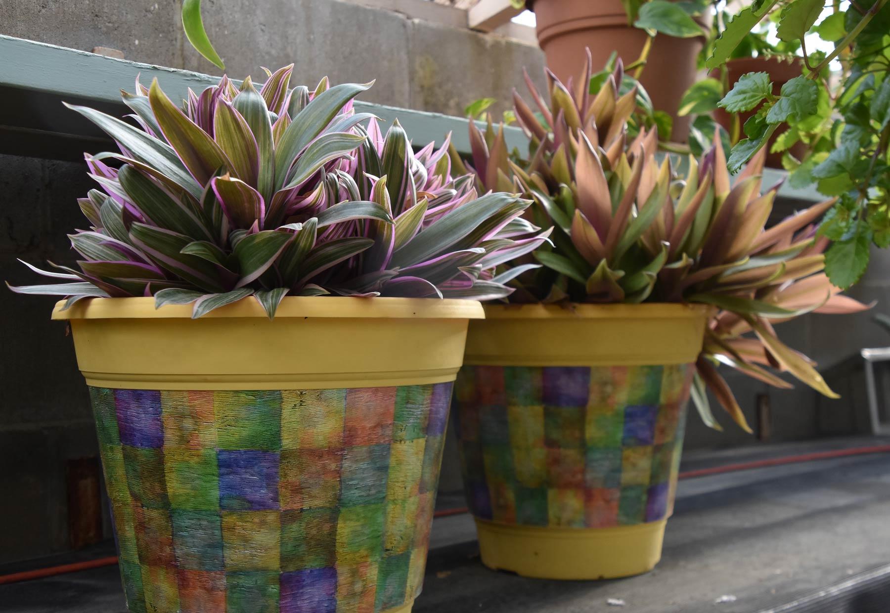 webplantsale6