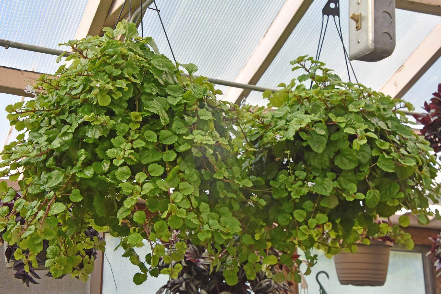 webplantsale9