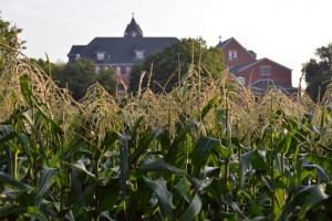 By mid-July the corn is high enough to block a view of the Motherhouse.