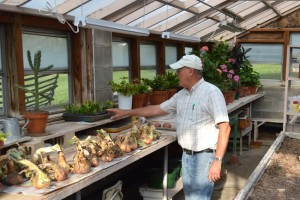 """The Motherhouse greenhouse provides storage space in the summer, while also becoming an """"ICU"""" to provide special care for ailing house plants,  shown in the background."""