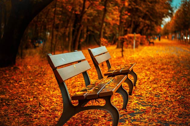 PIX-AutumnBench