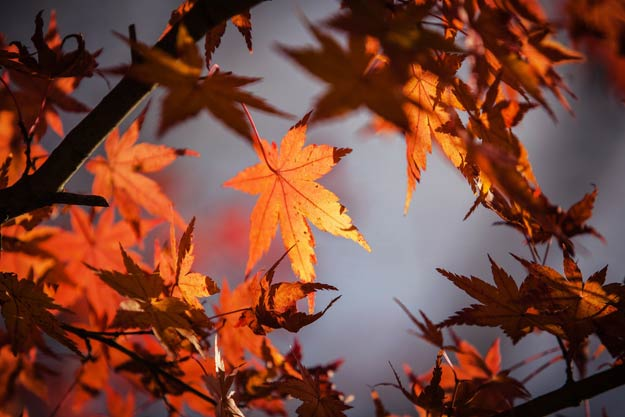 PIX-AutumnLeaves-dark