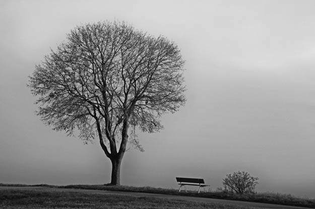 PIX-Winter-treebench