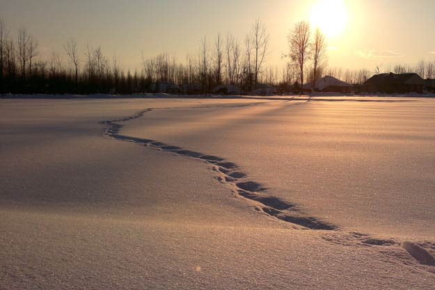 pix-Winter-snowtracks